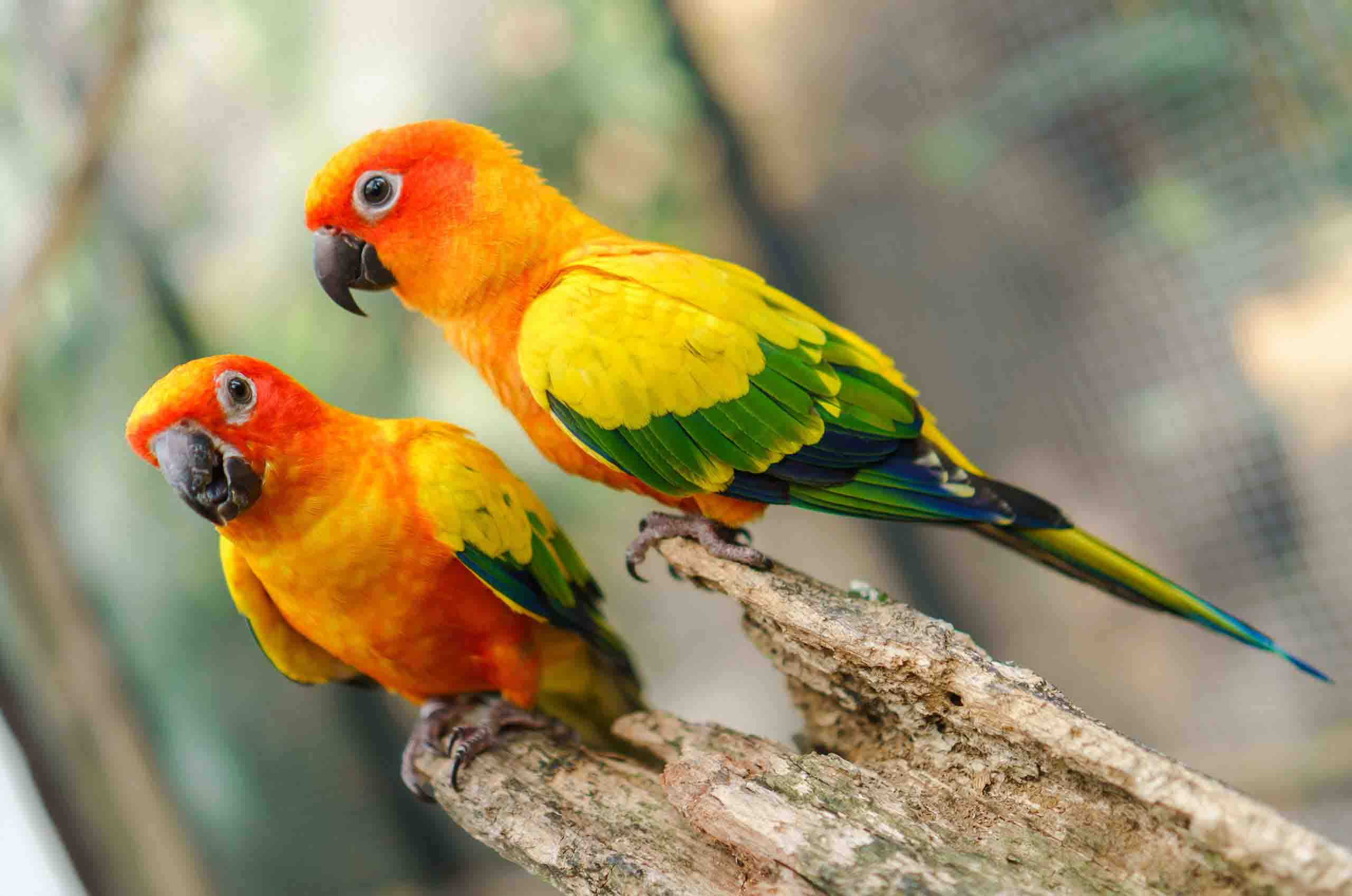 Keeping Birds - Feathered Friends