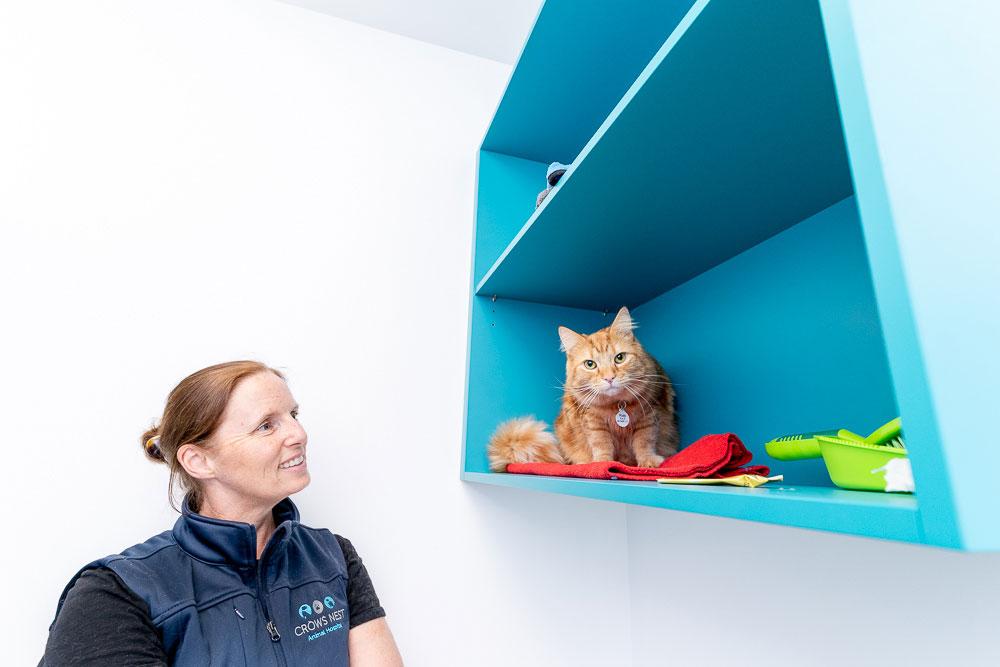 Kitty in Animal Hospital